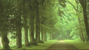 Forest picture