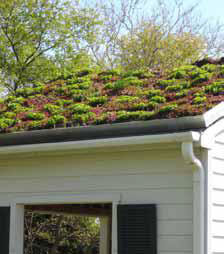 Picture of green roof