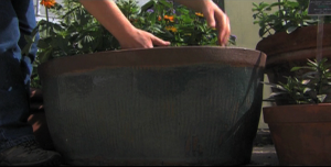 picture of planing in a pot