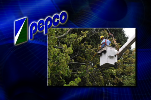 image for 21 This Week On The PEPCO Tree Trimming Controvers