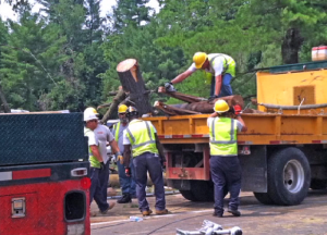 Tree debris removal work