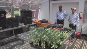 Image of two man standing in a greenhouse on Redwiggler Farm