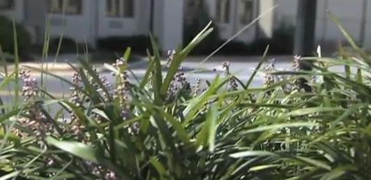 green plants in urban setting