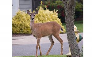 deer in road for slider 450 x 280