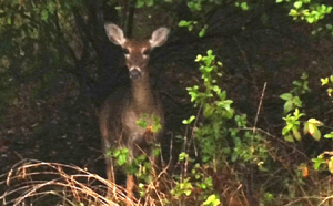 deer in woods for slider 450 x 280