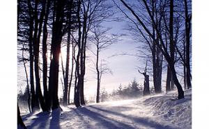 winter wind for slider 450 x 280
