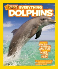 Everything Dolphins