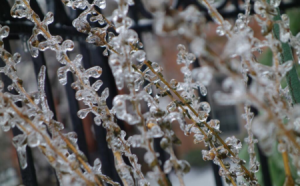 freezing rain andd sleet on plant for slider 450 x 280