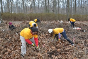 photo volunteers cleaning up azalea garden