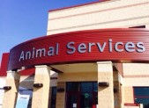 Animal Services Division