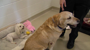 photo of two dogs at animal shelter
