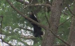 photo of NIH Bear