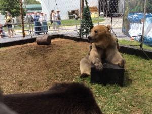fair bears