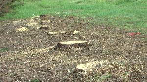 photo of tree stumps