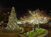 photo of holiday lights in Bethesda