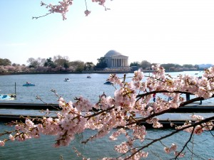 The Washington, D.C. Tidal Basin surrounded by Cherry Blossoms (c) Diana Belchase