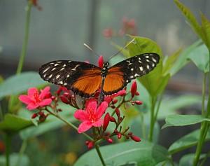 monarch closep