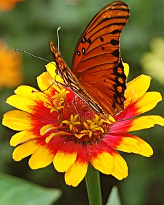 red butterfly yellow flower