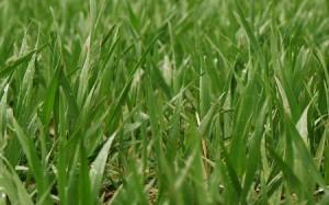 Grass Close Up 450x280