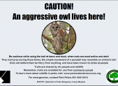 Aggressive Owl_10-15-15