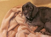 several seized dogs now up for adoption for sldier 855 x 380