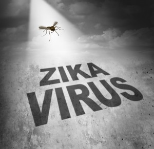Zika virus risk symbol as the shadow of a disease carrying mosquito forming text that represents the danger of transmitting infection through bug bites resulting in zika fever.
