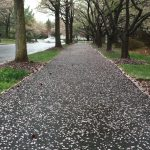 Grants Awarded for Bethesda Trolley Trail, Other Paths in County