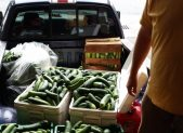Pick up truck with produce