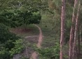 pathways-blog-image