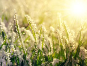 frost istock Frozen grass at sunrise close up.
