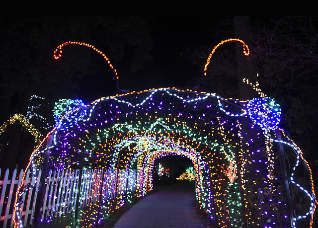 Brookside Gardens Light Display In Wheaton In Its 20th