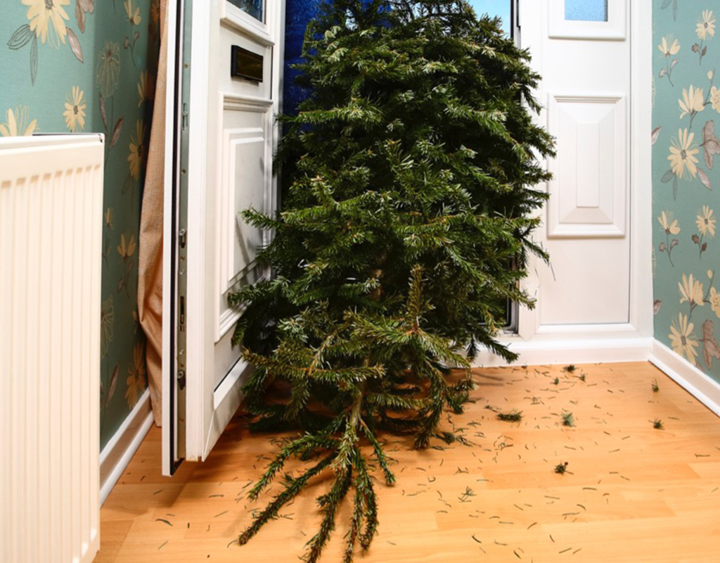 Ho- Ho- How to Recycle Your Christmas Tree in Montgomery ...