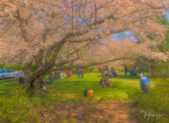 Kenwood-Central-Park---Cherry-signed-web