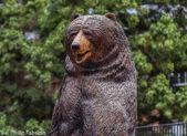 Landon Bear