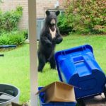 See Photos of Black Bear Spotted in Colesville