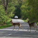 Park Closures Due to Deer Population Management Program Begin this Week
