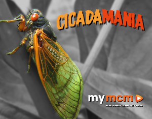 Cicada Mania graphic for tag page