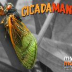 Cicada Mania in Montgomery County