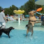Pooch Pool Party Makes a Splash in Gaithersburg